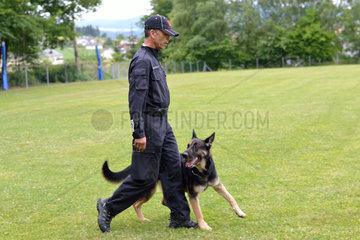 Deutscher Schaeferhund geht Fuss bei seinem Besitzer