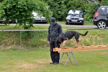 Schaeferhund balanciert ueber Rettungshundeleiter