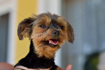 kleiner suesser Hund