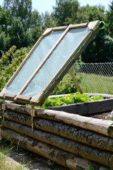 Hochbeet aus Holz  Salatpflanzen fuehlen sich wohl