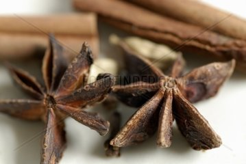 Star anise and a few sticks of cinnamon