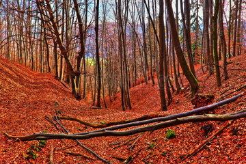 Oesterreichischen Wald an einem sonnigen Tag