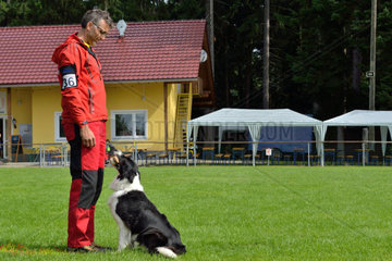 Border Collie in retrieving with dog trainer