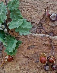 Rustikaler Hintergrund zum Herbst mit Eicheln und Kastanien