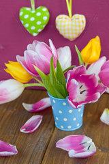 Bunte Tulpen in kleinem blauem Eimer vor rotem Hintergrund