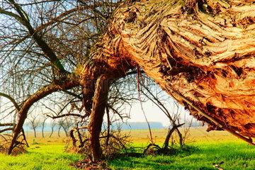 Der schiefe Baum in der Puszta