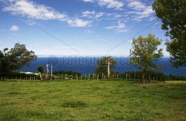 gruene Wiese an der spanischen Atlantikkueste bei Murtriku  Baskenland  Costa Verde  Spanien  Europa