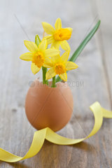 Daffodils in egg shell