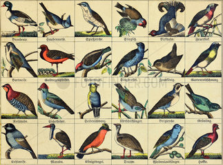Vogelarten  1865