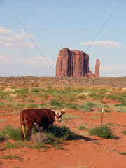 Kuh im Monument Valley