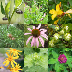 Collage of different remedial plants