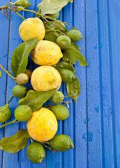 Organic lemons on blue