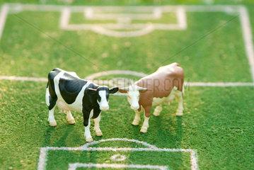 Kuh; Kuehe; zwei; Wiese; Spiel; Fussball; Stadion; Platz; Idee; witzig; Konzept; gepfleckt; Flecken; bunt; braun; schwarz  Tier  Tiere  tierisch  unterschiedlich  verschieden  Unterschied  Variante  Vieh