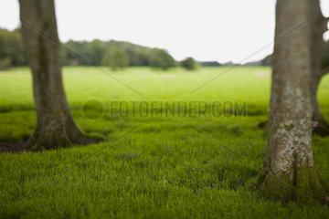 Stimmungsvolle Wiesenlandschaft mit Baeumen im Vordergrund