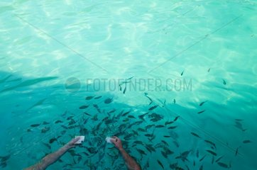 "Fischfuetterung - Bootsausflug ""Koh Chang Boat Trip"" / Koh Chang"