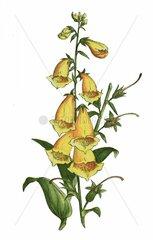 Nouvelle flore colori_©e de poche des Alpes et des Pyr_©n_©es. v.1. Paris K