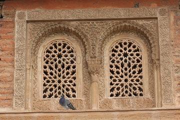 Taube vor eine Fenster der Alhambra