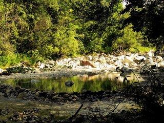 Kleiner Teich in wilder Natur