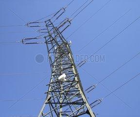 Strommasten Hochspannungsleitung