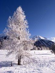 Switzerland  Engadine  Celerina Winter scene