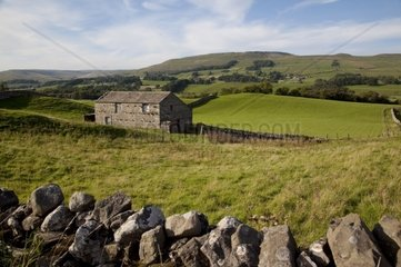 UK  England  Yorkshire  Wensleydale  drystone walls divide up lush green fields