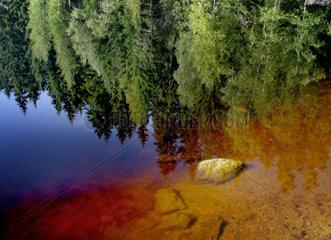 Ufer eines Waldsees