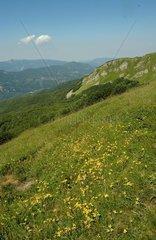 Italy  Emila Romagna  alpine Prairie in the Apennines