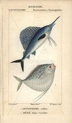 Sailfish and moonfish