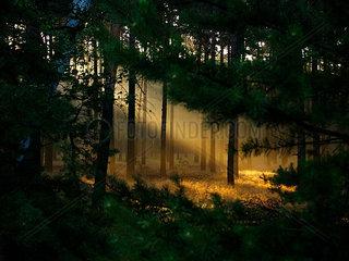 Sachsen  Wald