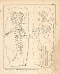 Fossil human skeletons