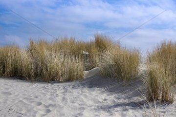Duenenlandschaft  Insel Borkum  Nationalpark Niedersaechsisches Wattenmeer  UNESCO-Weltnaturerbe  Ostfriesland  Niedersachsen  Deutschland  Europa