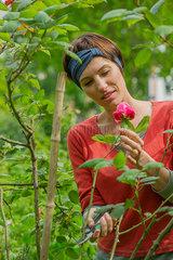 Woman cutting rose from bush in garden
