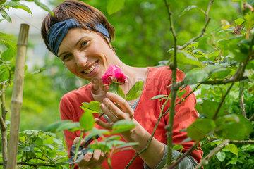 Woman tending to rosebush in garden  portrait