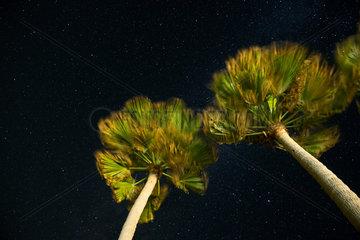 Sternenhimmel unter Palmen