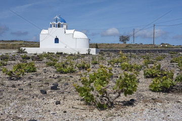 A chapel surrounded by low grapevines  Santorini  Greece  Europe