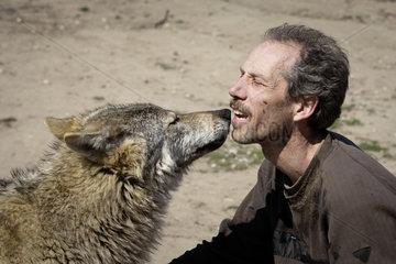 Jos de Bruin  Halter von Woelfen  Wolfhunden  Wolf-Hybriden und Dingos