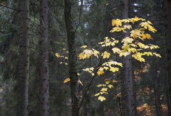 Blaetter im Herbst