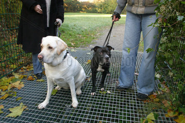 Dogstop-Gitter in Bochum