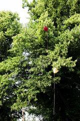 Luftballons im Baum