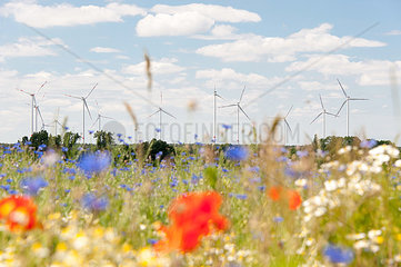 Windpark mit Blumenwiese