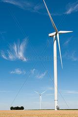 Windkraftanlage im Sommerfeld