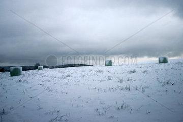 Strohfeld im Schnee