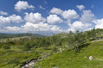 Landschaft im Femundsmarka Nationalpark  Hedmark Fylke  Norwegen  Juli 2011