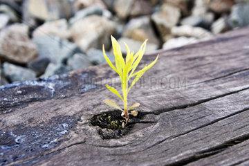 Eine Pflanze waechst in einer Bahnschwelle