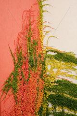 Fassade und Herbstfarben
