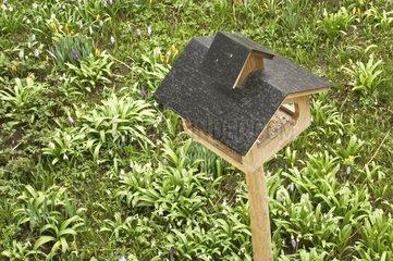 Vogelhaus in gruener Fruehlingswiese