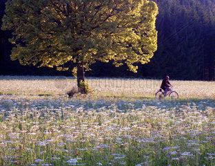 Radfahrer auf Sommerwiese