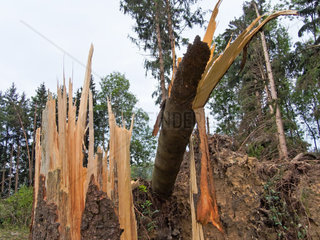 Sturmschaden Umgestuerzte Baeume im Wald nach einem Sturm