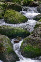 Bach mit fliessendem Wasser und Steinen
