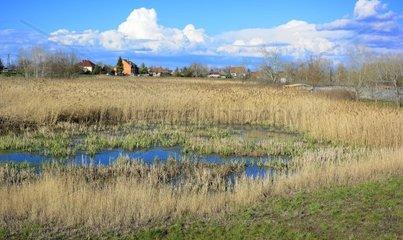 Theiss See Tisza to Grundwasser mit Schilf in Poroszlo Ungarn